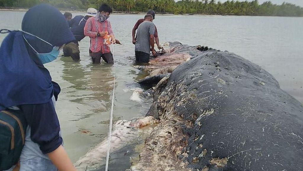 Please Jangan Buang Lagi Sampah ke Laut, Paus Sampai Mati Tuh