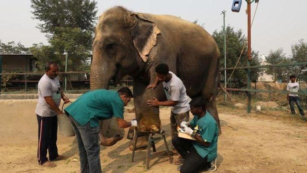 India Punya Rumah Sakit Khusus Pertama untuk Gajah