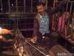 Buaya yang Terkam Bocah hingga Tewas di Riau Ditangkap Warga