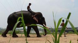 Pertama Kalinya, Rumah Sakit Gajah Didirikan di India