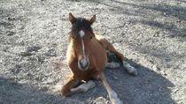Puluhan Kuda Liar Terancam Mati Kelaparan di Taman Nasional di Australia