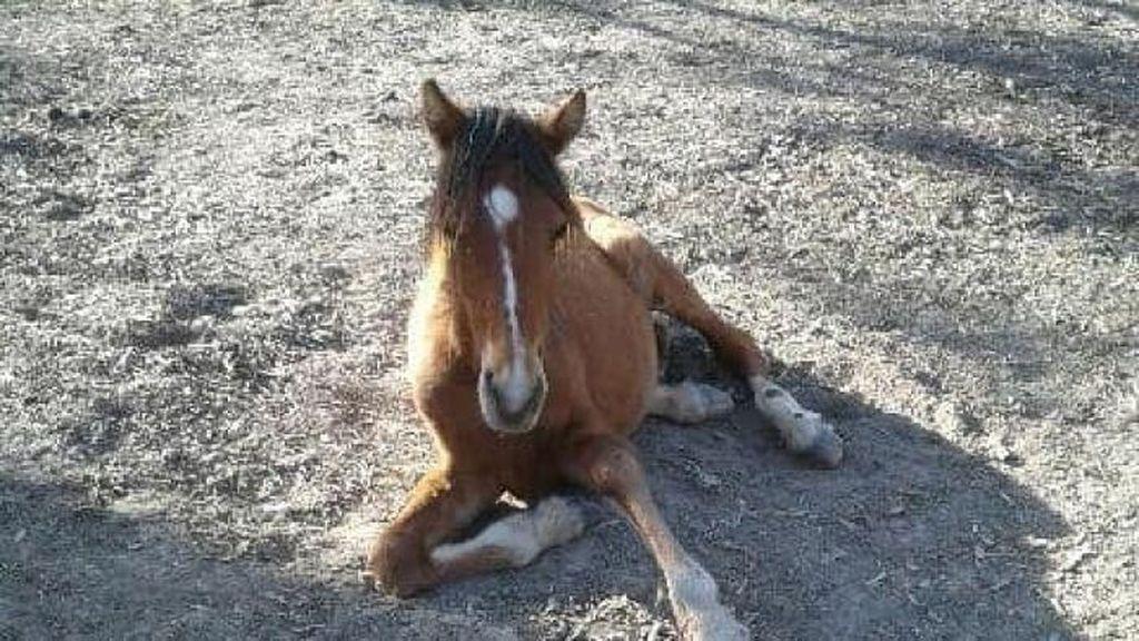 Yuk Intip Cara Membuat Minyak Kuda yang Berkhasiat
