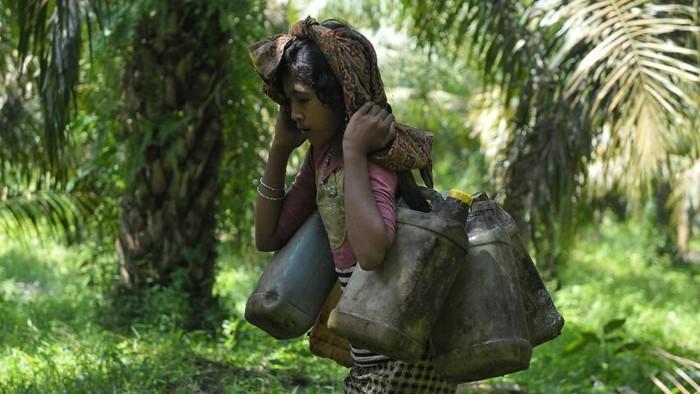 Orang Rimba masih memegang teguh kearifan lokal yang dianut secara turun-temurun. Alih fungsi hutan menjadi ancaman bagi keberlangsungan hidup mereka kini.