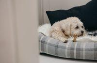 Ketika Hotel untuk Anjing Tak Kalah Bagus dengan Manusia