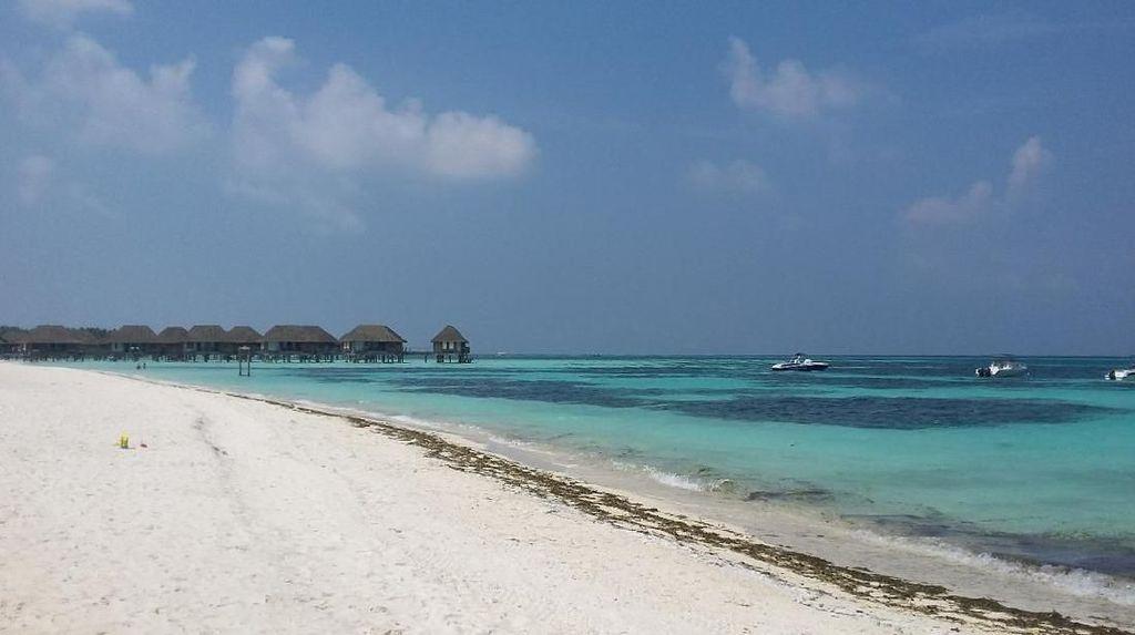 Senangnya Liburan Gratis ke Maldives Sama detikTravel