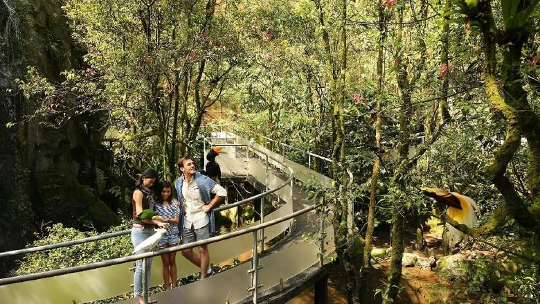 Pengunjung menyusuri taman burung di Taman Safari Bogor