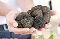 Ini Alasannya Jamur Truffle Harganya Selalu Mahal di Dunia