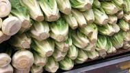 Diduga Sebarkan Bakteri E-Coli, Penjualan Selada Romaine Dilarang