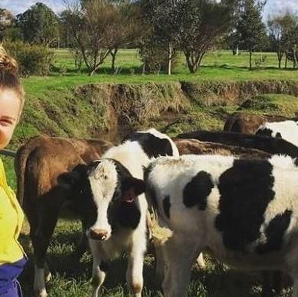 Pelajaran Pertanian Akan Diwajibkan di Sejumlah Sekolah Australia