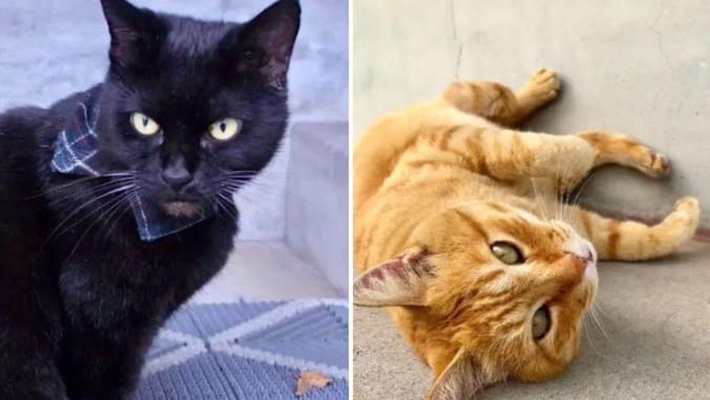 Lucu! Selama Dua Tahun, Dua Kucing Ini Coba Masuk ke Museum