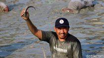 Serunya Berebut Ikan di Telaga Mungli Lamongan