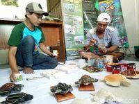 Bikin Replika, Cara Cegah Perburuan Liar Penyu di Banyuwangi