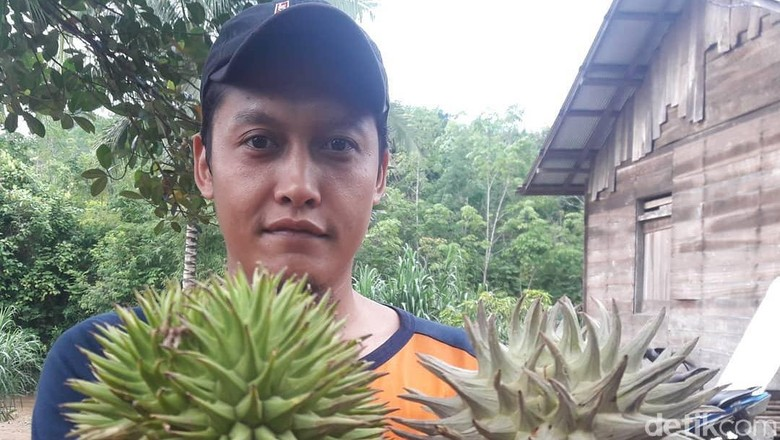Makan Buah Langka, Lidah Hanif Wicaksono Mati Rasa