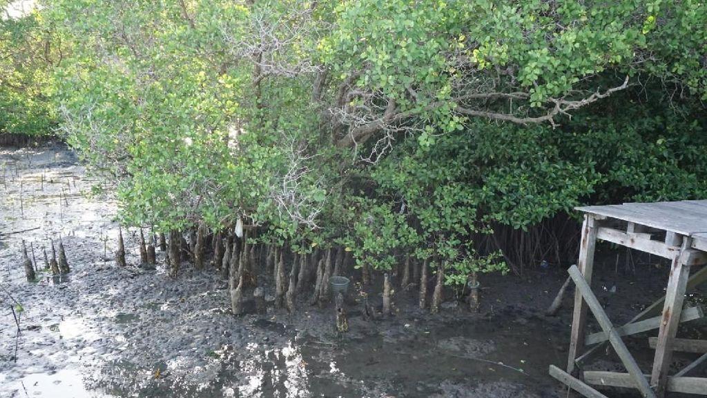 Kepmen Susi Soal Teluk Benoa Batalkan Reklamasi, Ini Respons Luhut