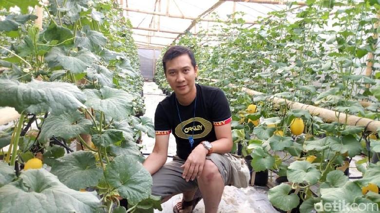 Jadi Petani Hidroponik Melon Di Ponorogo Dedy Raup Rp 25