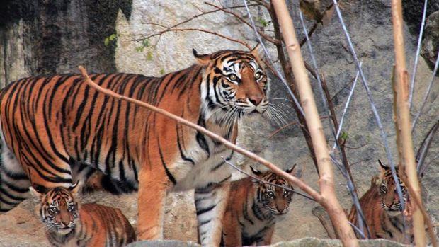 Tiger Diplomacy, Perkuat Hubungan Indonesia dan Jerman