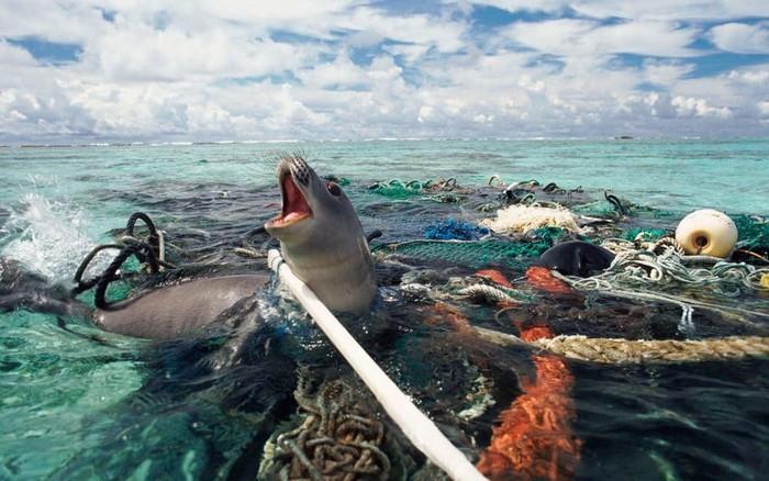 Image result for ikan mati karena sampah plastik