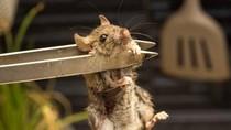 Viral! Restoran Burger Ini Tertangkap Memasak Tikus Lewat Video