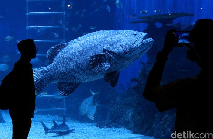 Jakarta Aquarium menjadi pilihan menarik untuk menikmati akhir pekan bersama keluarga. Akuarium yang berada di dalam mal ini merupakan tempat wisata edutainment (Education Entertainment) yang menarik.