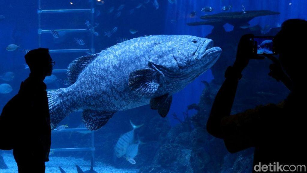 Menikmati Keindahan Biota Laut di Jakarta Aquarium