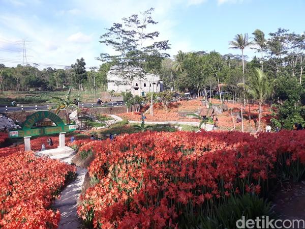 Sudah sekitar 3.000 pengunjung datang ke kebun ini (Pradito Rida Pertana/detikTravel)