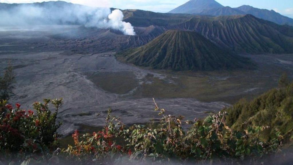 Gunung Bromo Erupsi, Wisatawan Dilarang Mendekat di Radius 1 Km