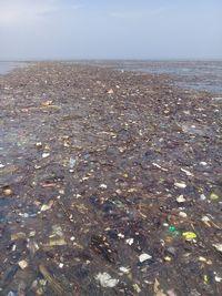 Duh! Penyu-penyu di Pulau Pari Mati Gegara Sampah Plastik-Minyak