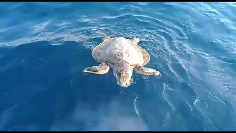 Sampah plastik dan minyak di perairan Pulau Pari, penyu sisik mati. (Imam, Suryadi, dan Boni/Warga RT01 RW04 Pulau Pari)