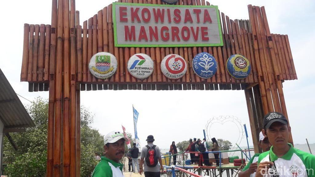 Melihat Ekowisata Mangrove di Muara Gembong Bekasi