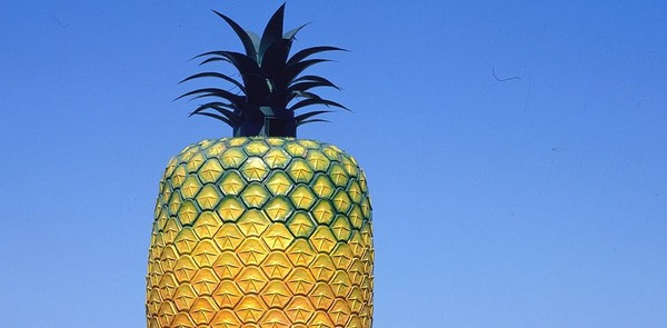 The Big Pineapple dibangun sebagai salah satu bentuk penghargaan dan rasa syukur atas tumbuh suburnya nanas di Bathurst. Traveler tak hanya bisa foto-foto dari luar, tapi juga menikmati aktivitas di dalamnya (southafrica.net)