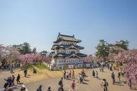 Kastil Hirosaki juga sebagai tempat terbaik menikmati sakura di Jepang (iStock)