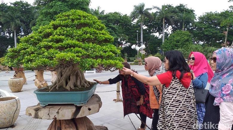 Bonsai Rp 1 Miliar Yang Mendadak Jadi Primadona Di Surabaya
