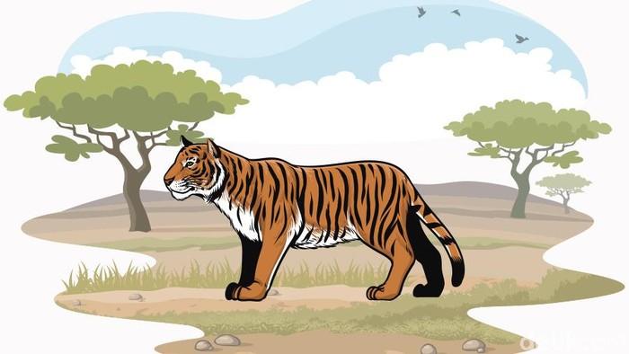 Foto: Ilustrasi harimau (Andhika-detikcom)