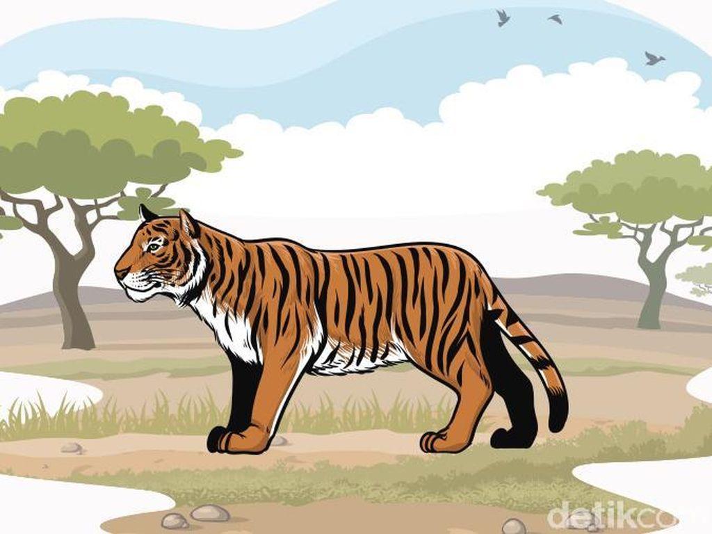 Petani Tewas Diterkam Harimau, Polisi Imbau Warga Pagaralam Tak ke Hutan