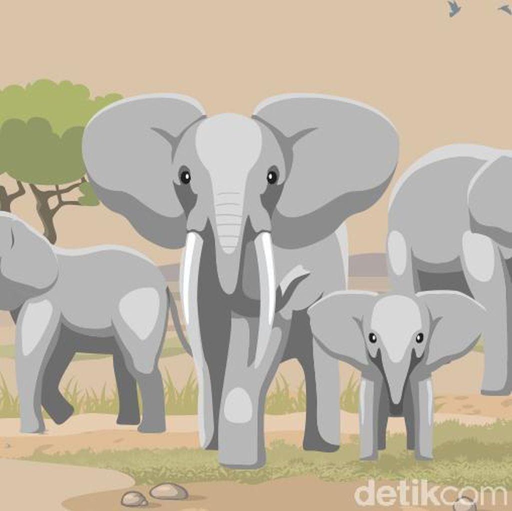 Gajah Ditemukan Mati di Riau