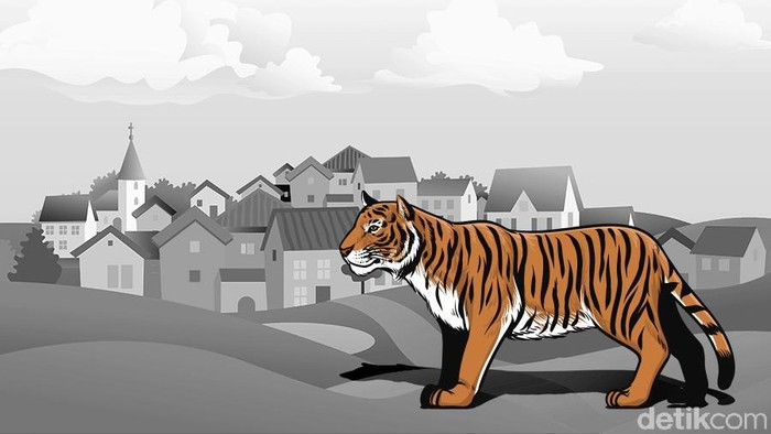Ilustrasi harimau (Andhika-detikcom)