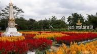 Foto: Taman Bunga Cantik Bak di Eropa, Padahal di Yogya