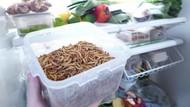 Kini Ada Paket Ternak Cacing untuk Diolah Jadi Makanan