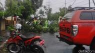 Pohon Tumbang dan Hujan Hentikan Jalan Santai Hari Kesehatan