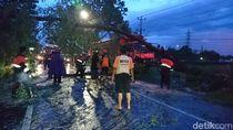 Pohon Tumbang, Jalur Pantura Kudus-Pati Sempat Macet 1 Jam