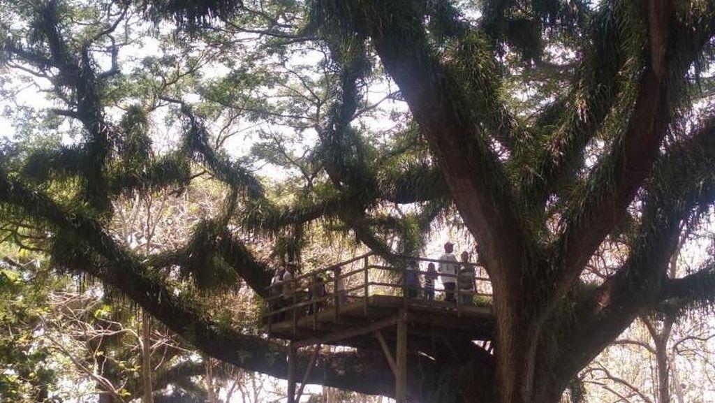 Hutan Lord of The Rings ala Banyuwangi