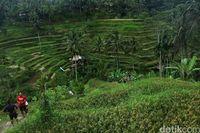 Tempat di Bali Ini Masuk Keajaiban Alam Terindah di Dunia