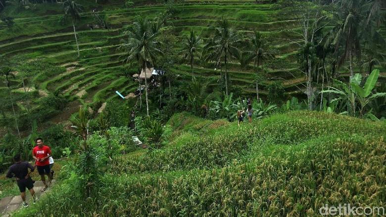 Wahana ayunan (Swing) di Subak Tegalalang, Bali, menjadi salah satu favorit wisatawan mancanegara. Begini keseruannya.