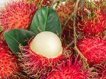 Terjatuh dari Pohon Rambutan, Bocah 6 Tahun Tewas