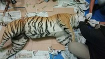 Hutan Sumatra Kian Menipis, Populasi Harimau Tinggal 400 Ekor