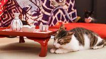 Penutupan Kafe Kucing Ini Ditunda karena Tunggu Pengadopsi Kucing
