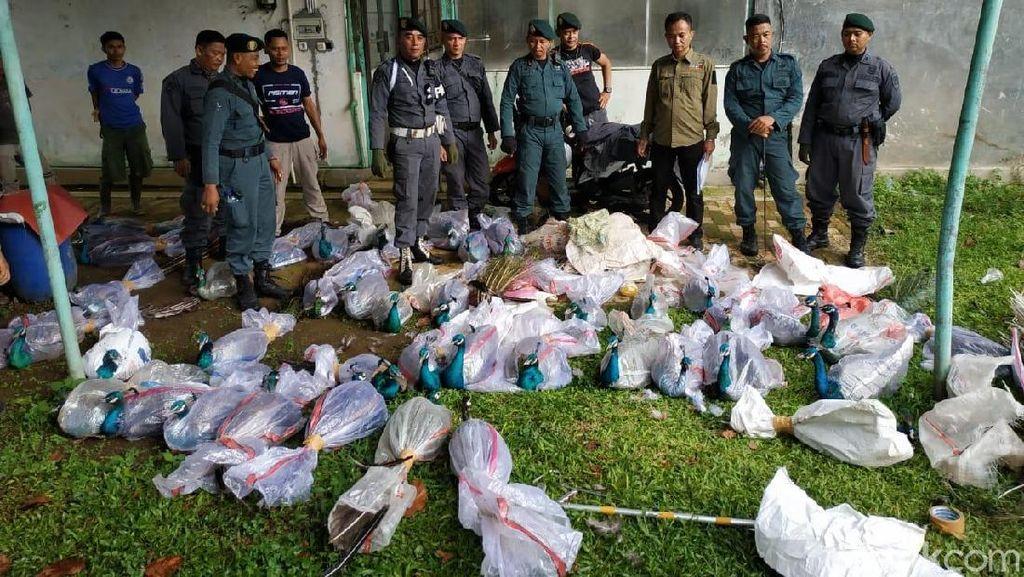 KLHK Gerebek Vila di Bogor, Temuannya Bikin Kaget !