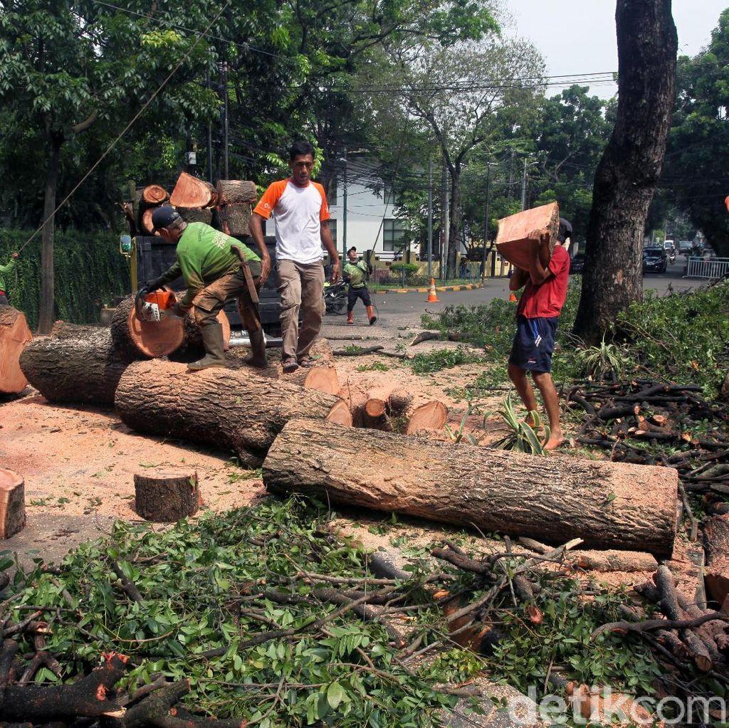 Hujan Lebat di Jakarta Akibatkan 4 Pohon Tumbang