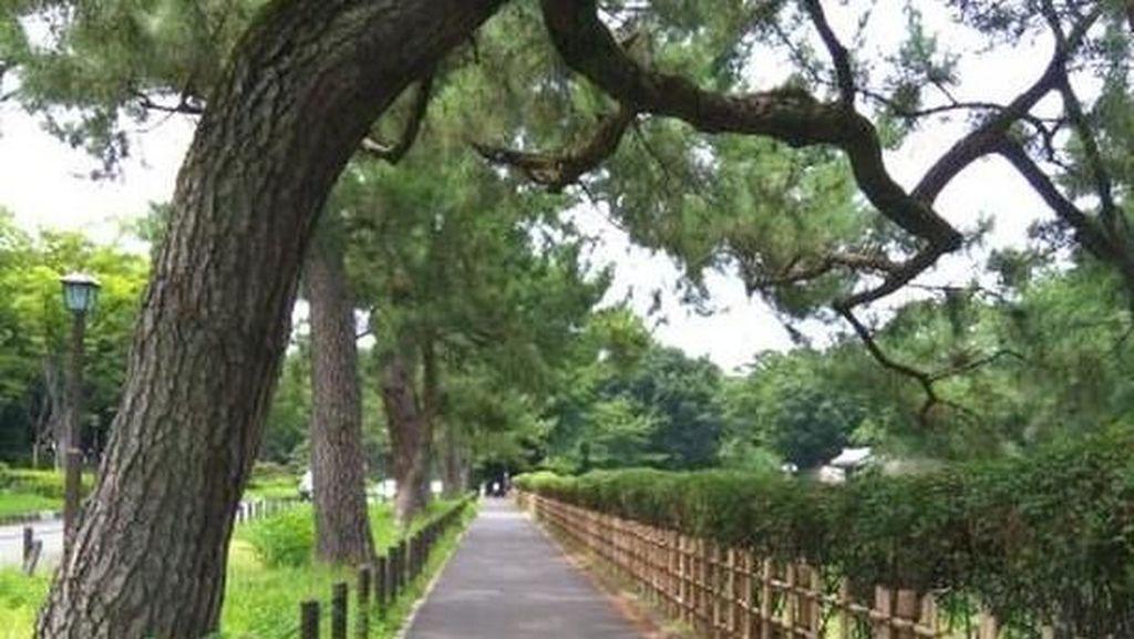 Potret Nagoya Jepang dan Kebiasaan yang Jarang Diketahui