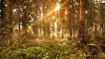 Otokritik LSM Lingkungan